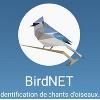 Birdnet ou comment reconnaître le chant des oiseaux
